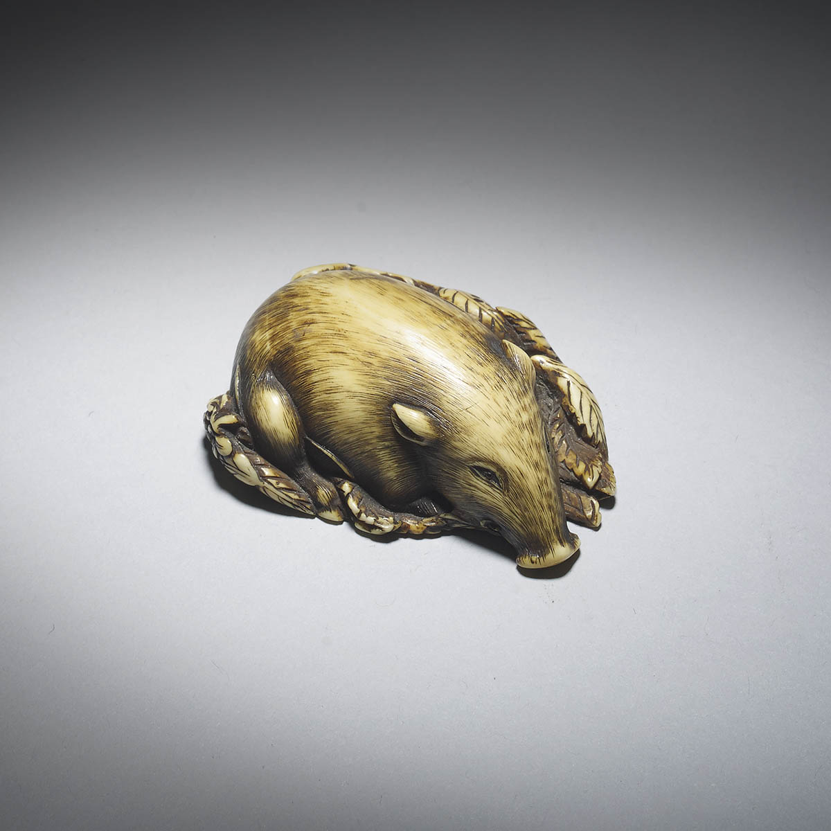 Ivory netsuke of a Boar sleeping on leaves