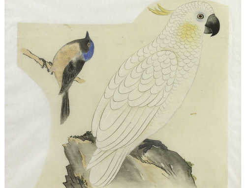 Two studies of Australasian birds