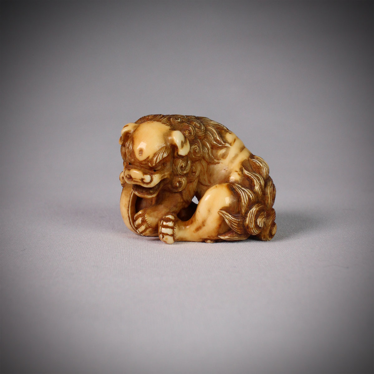 Stained Ivory netsuke of a Shishi, MR3073_v1