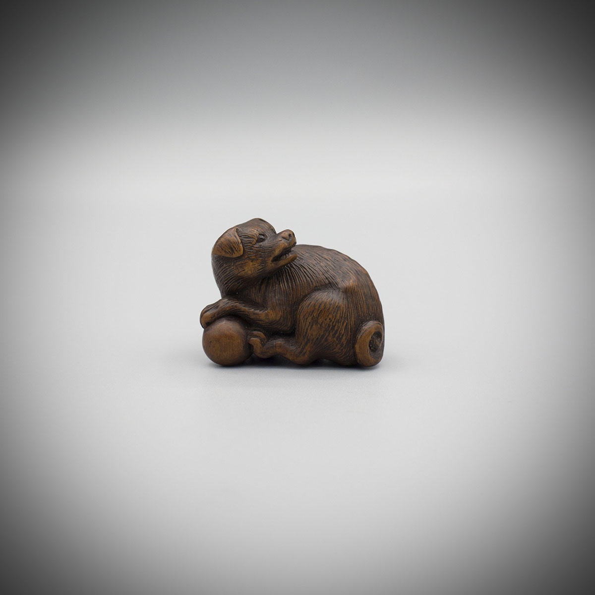 Boxwood netsuke of a dog, Tametaka, MR2954_v1