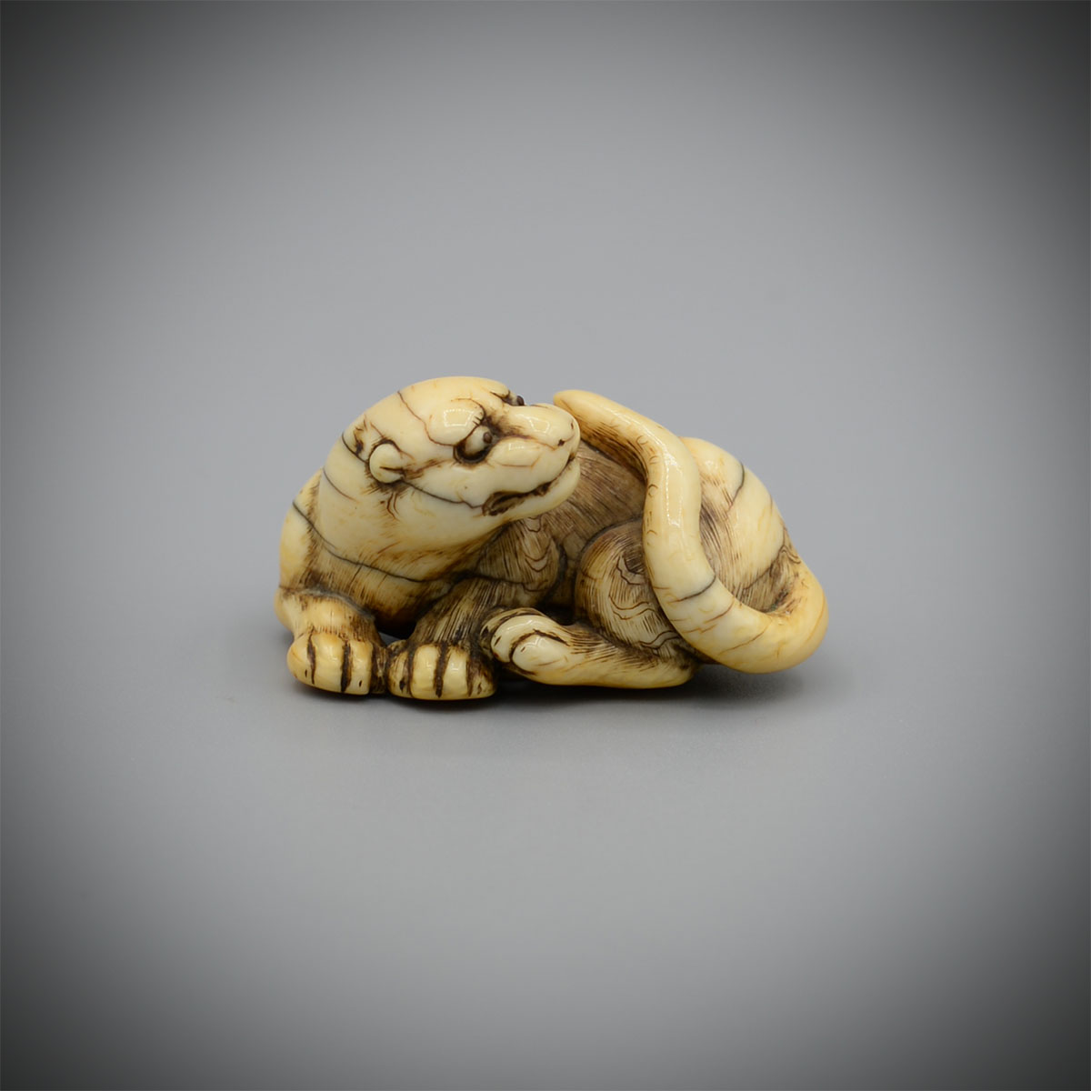 A Well Worn Ivory Netsuke of a Male Tiger by Yamaguchi Okatomo (active 1780-1830),MR3421_v1