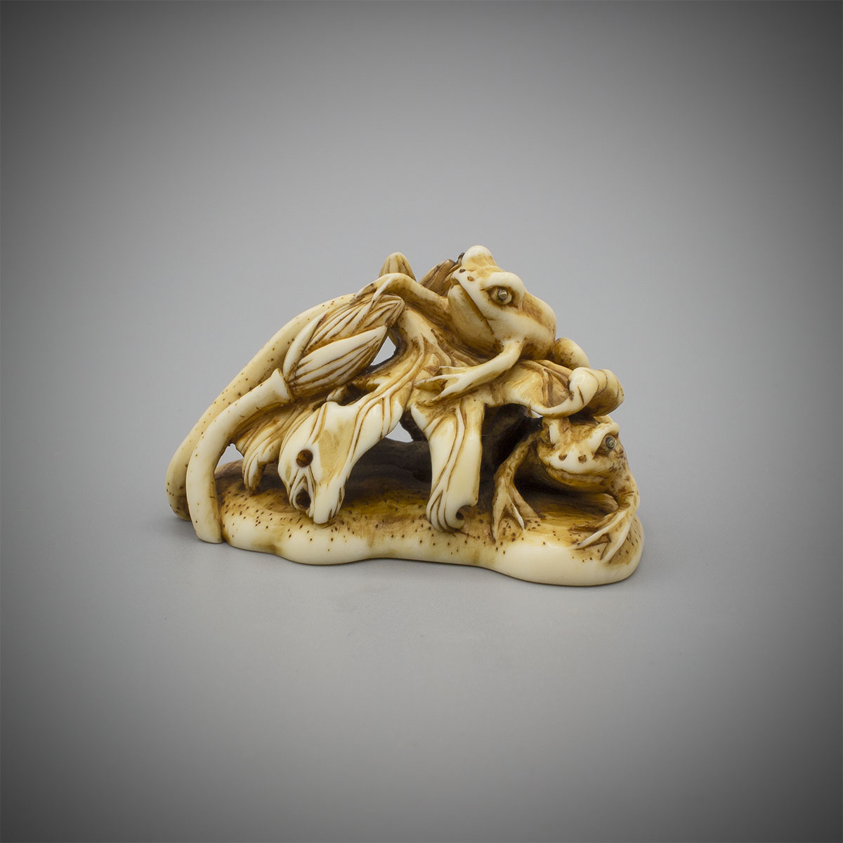 Ivory Netsuke of Two Frogs and Lotus, attributed to Okazaki Rensai, MR3576_v.1