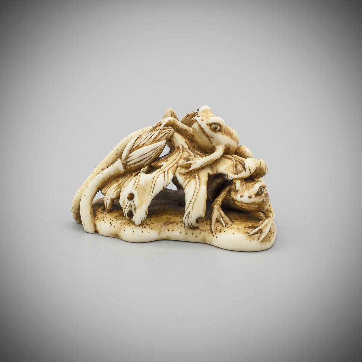 Ivory Netsuke of Two Frogs and Lotus, attributed to Okazaki Rensai, MR3576_v.1-2