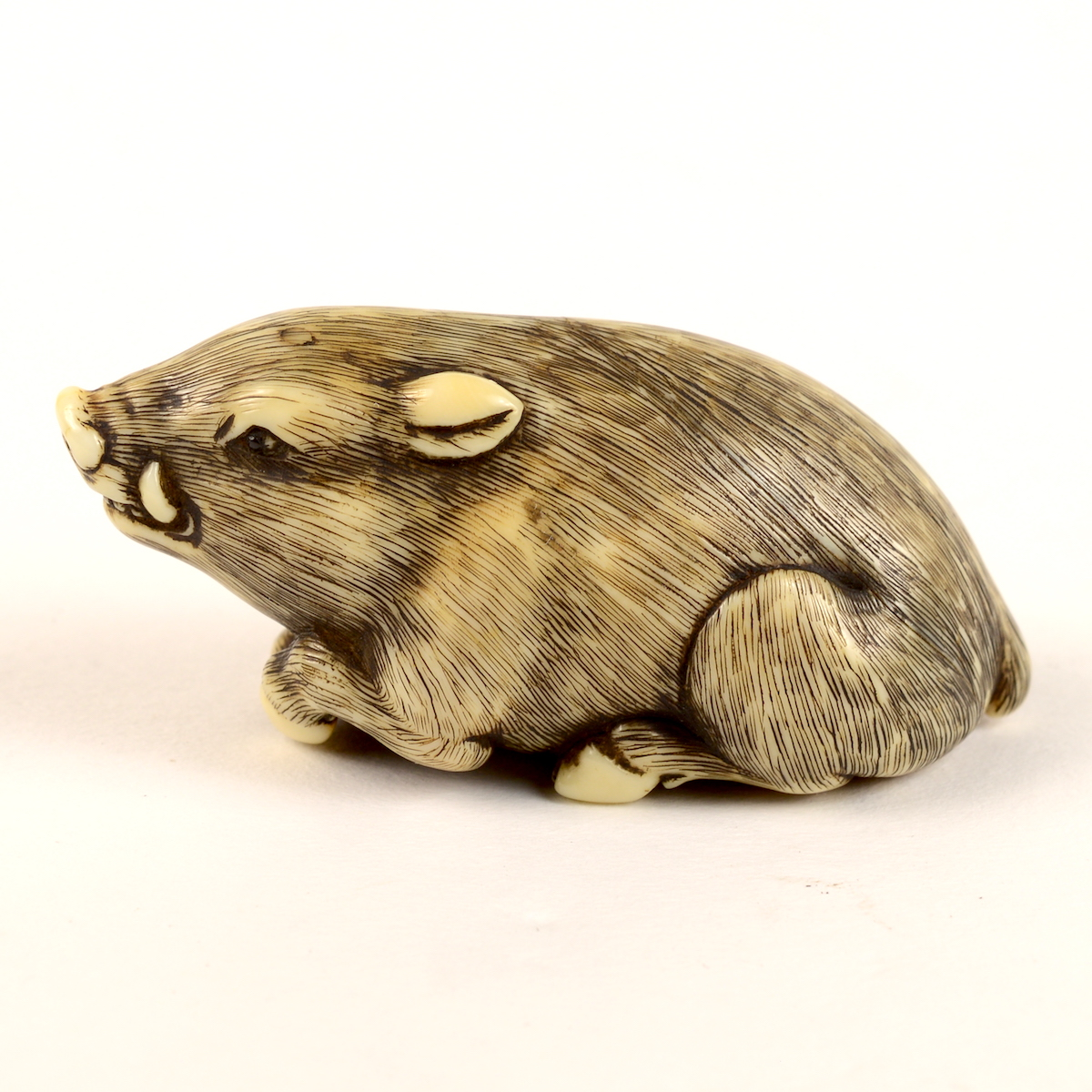 Ivory boar netsuke left profile