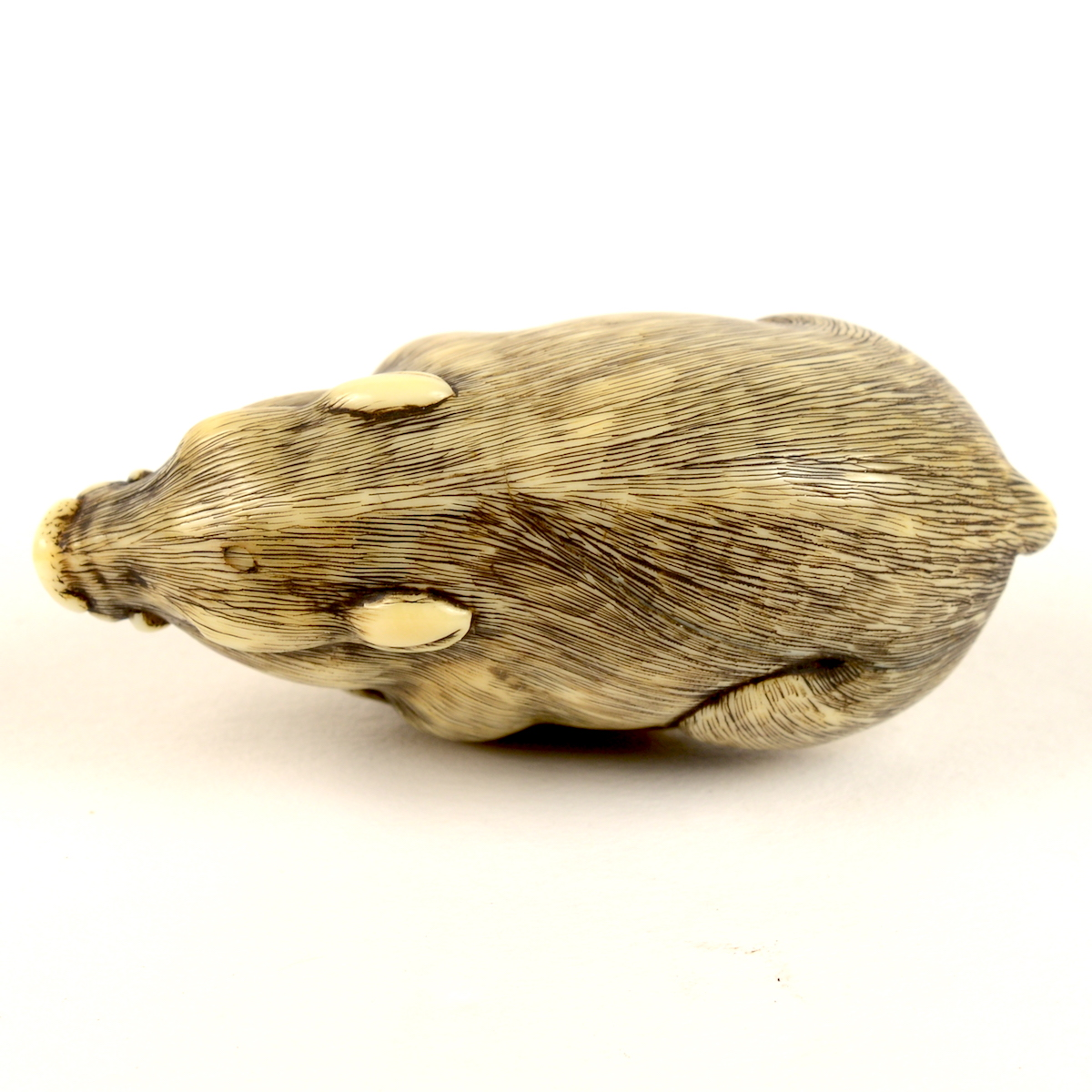 Ivory boar netsuke bird's eye