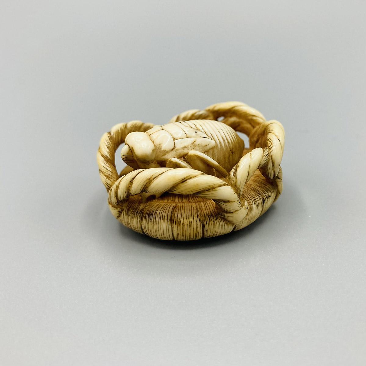B510 Homin cicada