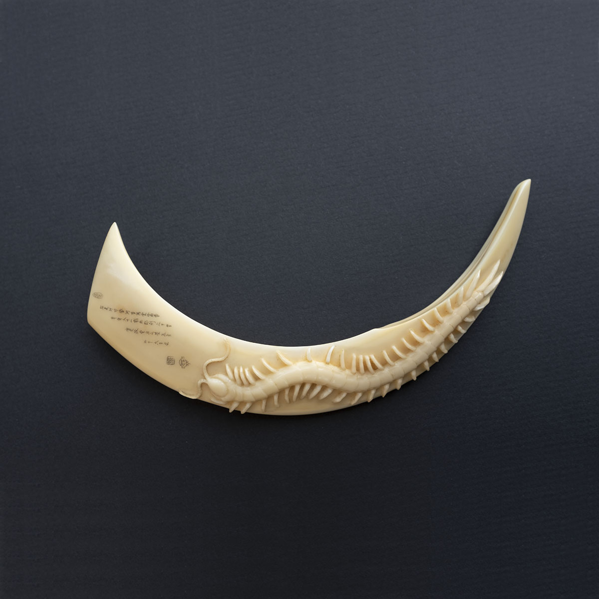FUJI6686 SS48 Boar's tusk-2
